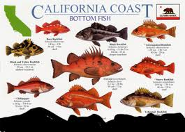 Rockfish Identification Chart Fishing Report 1 2 Day Deep Water Rockfish Trip In San Diego