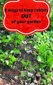 how do i keep rabbits out of my garden. Plain Rabbits Feathers In The Woods 8 Ways To Keep Rabbits Out Of Your Garden For How Do I Keep Rabbits Out Of My Garden C