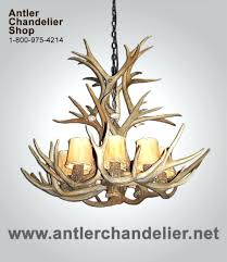 chandeliers real antler chandelier uk real antler mule deer cascade chandelier mdcascm 6 authentic antler
