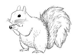 Small Picture How To Draw A Squirrel Squirrel Drawings and Sketches