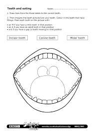 BBC - Schools Science Clips - Teeth and eating Worksheet