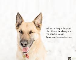 Dog Quotes Love And Loyalty Classy 48 Inspirational Dog Quotes SpartaDog Blog