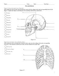 Small Picture Coloring Download Skull Bones Anatomy Coloring Pages Skull Bones