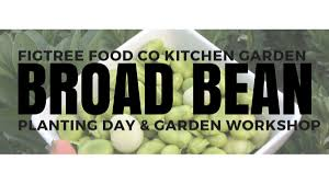 Kitchen Garden Foods Broad Bean Planting Kitchen Garden Workshop Figtree Food