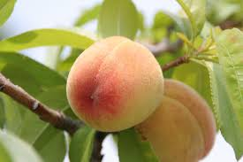 New yeast infection pill will make your vagina smell like peach