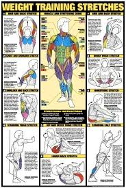 1 Fitness Weight Training Flexibility Poster Body Building