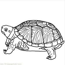 Small Picture Coloring Pages Animals Old Turtle Printable With For Adults glumme