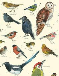 British Garden Birds Chart A4 Vintage British Garden Bird Chart Poster Nature Wildlife Print Birding