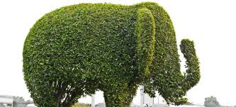 How to Trim a Bush in Fun Shapes How to Trim a Bush in Fun Shapes