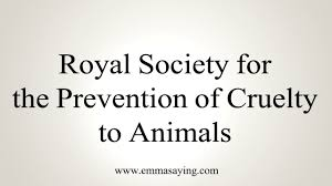 Image result for the Royal Society for the Prevention of Cruelty to Animals