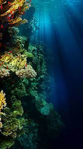 Pin by Wurth_It on Underwater Wallpaper ...