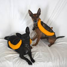 diy dogs banana costume