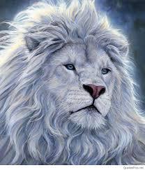 white lion with blue eyes wallpaper 3d. Unique Blue Hd Wallpapers Lion King With White Lion Blue Eyes Wallpaper 3d I