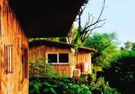 tree house jaipur. The Tree House Resort - Jaipur Building S