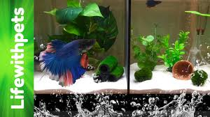 full size of fish tank divider how to make betta you stupendous photo 54 stupendous fish