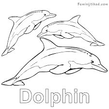 Dolphin Coloring Pages To Print At Getdrawingscom Free For