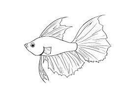 Small Picture Fish Tail Coloring Coloring Coloring Pages