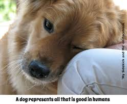 Dog Quote Good Things Going Around
