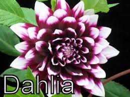flowers diffe types of flowers various flower flowering plants