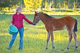 Feeding The Orphan Foal The Horse