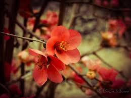 Red Flower Wallpaper Cute Red Flower Wallpaper