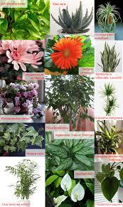 plants office garden green clean air indoor. exellent air houseplants for improving indoor air quality inside plants office garden green clean air indoor
