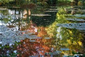 claude monet water garden in giverny