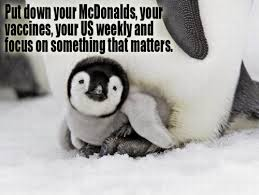 Animal Rights Quotes Enchanting Swinespi Funny Pictures Animal Quotes Animal Cruelty Quotes