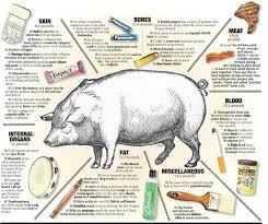 More Then Pork Comes From Pigs Hog By Products Infographic