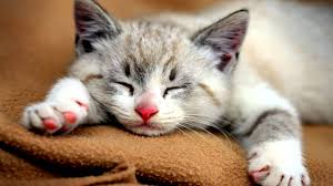cats hd wallpapers and images gallery 30