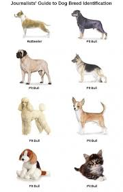 Journalists Guide To Dog Breed Identification Chart Haha