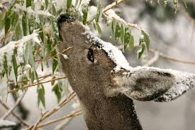 how to keep deer out of your garden diy