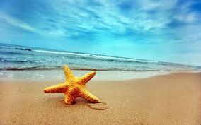 star fish summer desktop wallpaper hd