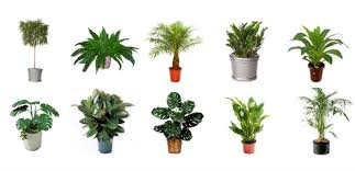 great office plants. Indoor Plants Featured Great Office N