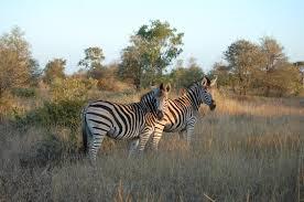 Kruger National Park Wikipedia