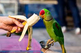 10 Tasty and Healthy Treats That <b>Birds Love</b>