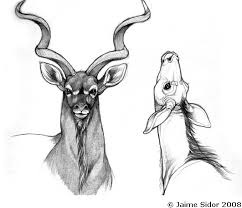 Small Picture The pictures for Greater Kudu Drawing