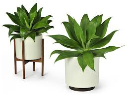modern office plants. Contemporary Indoor Plants Layout 20 Modern Office O