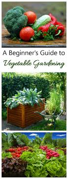 growing your own vegetables is one of the highlights of summer gardening there is nothing