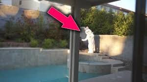 real sightings of the easter bunny. Perfect Bunny TOP 5 REAL LIFE SIGHTINGS Of The EASTER BUNNY  Proof The BUNNY  Exists And Real Sightings Of Easter Bunny N
