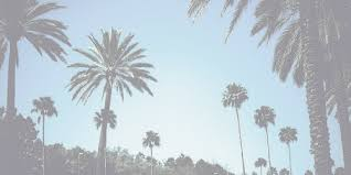 Palm Trees Tumblr Header Image Palm Trees Tumblr Header Nongzico