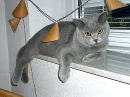 cat window sill cat window sill view trust cat window perch no sill cat window sill
