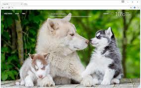 siberian husky wallpaper.  Siberian Intended Siberian Husky Wallpaper K