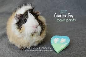 with guinea pig paw print keepsake