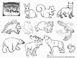 Arctic Animals Coloring Pages Beautiful Australian Animals Coloring