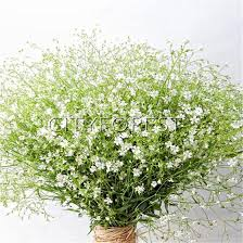 1000 gypsophila elegant white flower seeds baby s breath easy growing ideal cut flower beds and borders diy home garden container pot plant