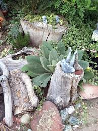 Tree Stumps The Year Of Living Fabulously