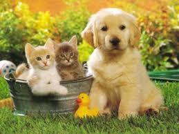 cute kittens and puppies together. Modren Cute Kittens On A Tub With Cute Puppy White  For Cute And Puppies Together T