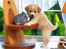 Free download Cute Animals Wallpapers ...