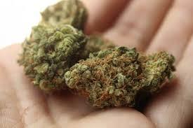 Мешканця Старобільського району засуджено за незаконне придбання, виготовлення, зберігання наркотичних засобів без мети збуту